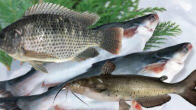 Photo of এমন ৬টি মাছ যা মোটেও খাওয়া উচিত নয়
