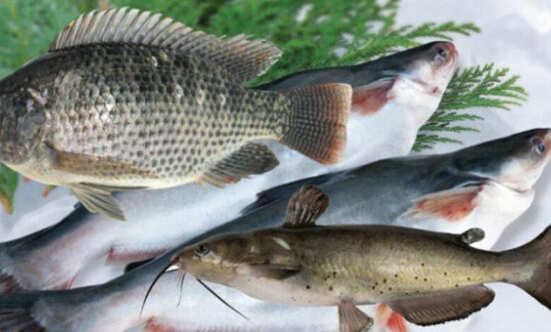 এমন ৬টি মাছ যা মোটেও খাওয়া উচিত নয়